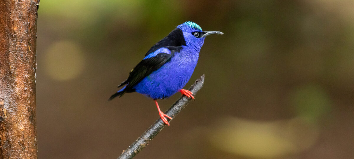Costa Rica birding, December 2019-featured_image